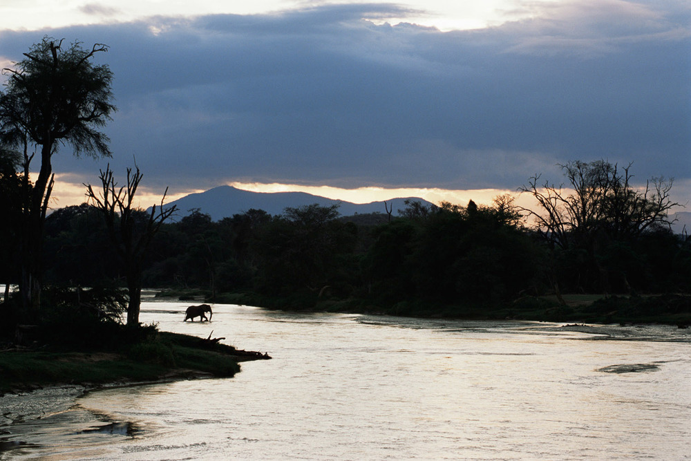 African elephant crossing Uaso Nyiro River at twilight, Samburu National Reserve, Kenya