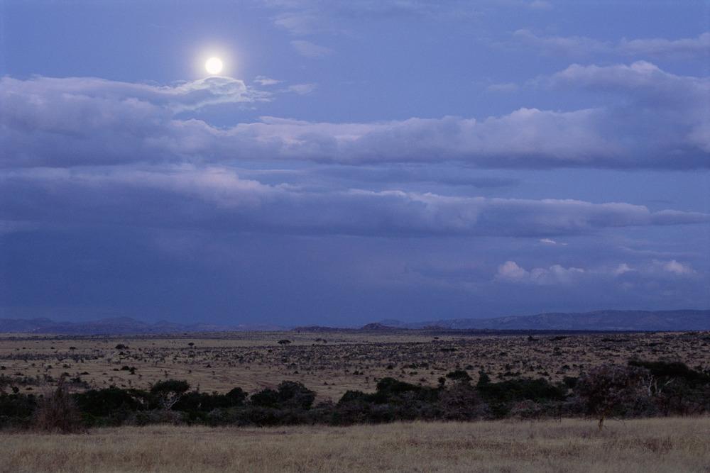 Moonlit savannah, Laikipia, Kenya