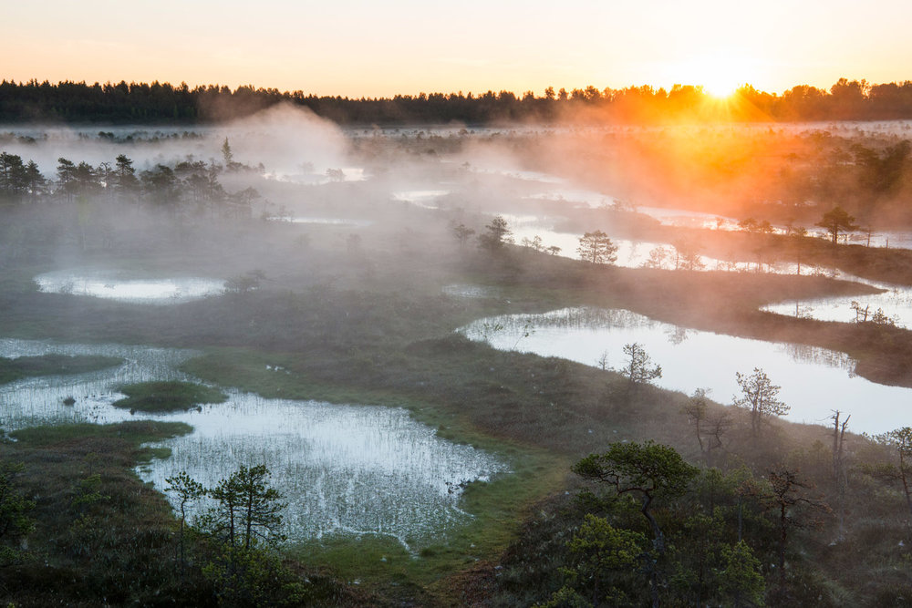 Wetland habitat at sunrise, Endla Nature Reserve, Järva region, Estonia
