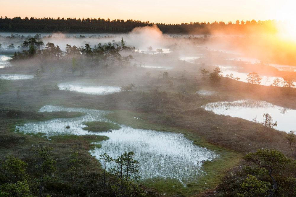 Wetland habitat at sunrise, Endla Nature Reserve, Järva region, Estonia
