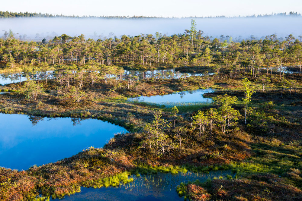 Wetland habitat at dawn, Endla Nature Reserve, Järva region, Estonia