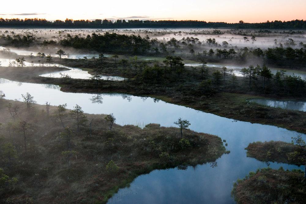Wetland habitat at dawn, Endla Nature Reserve, Järva region, Estonia