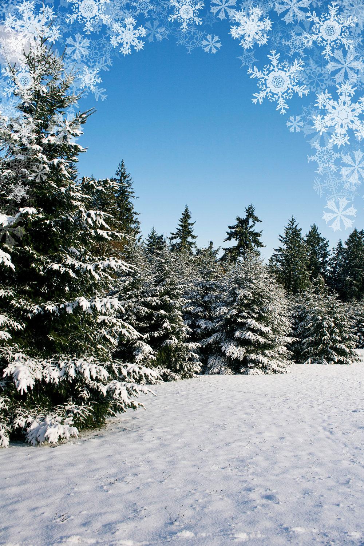 Winter006.jpg