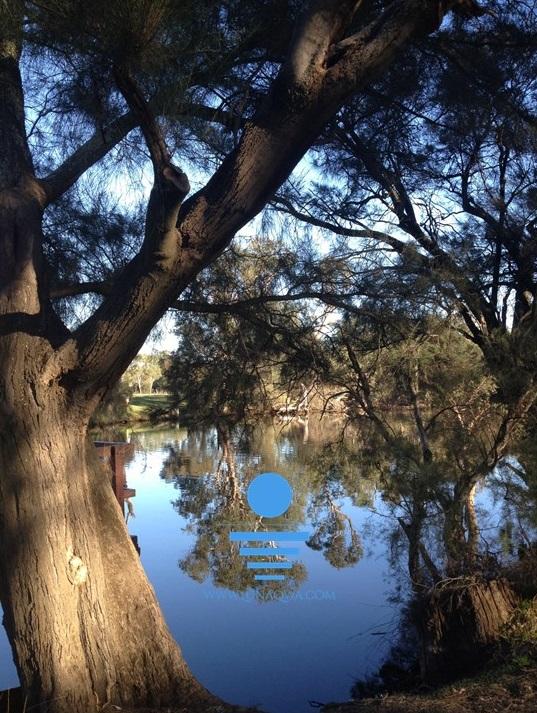 'Reflections' - SV-001 - LARGE