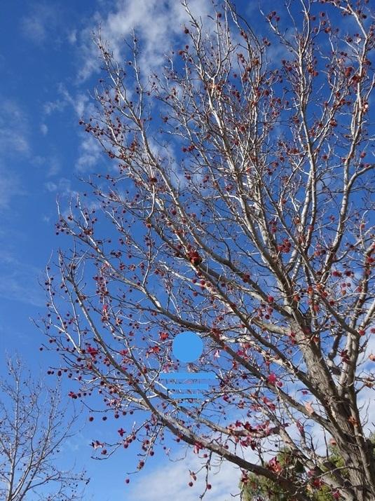 'Last Leaves of Winter' - SV-005 - LARGE