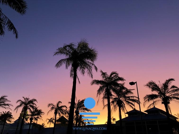 'Balmy Nights' - QLD-002 - LARGE