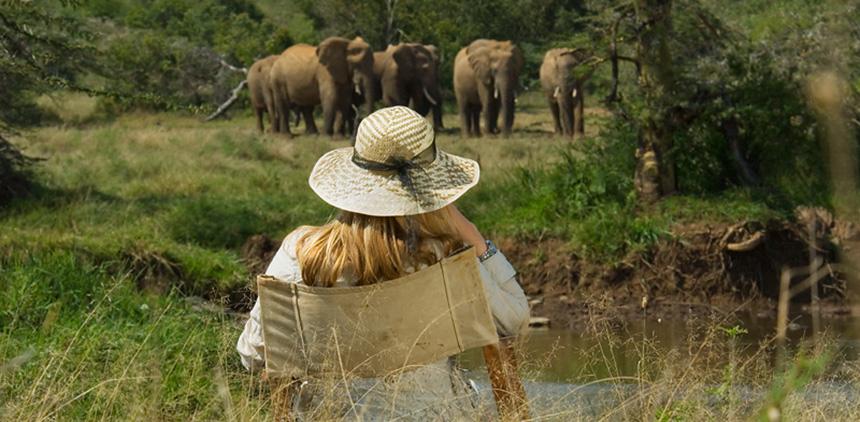 Elephants_at_Breakfast.jpg