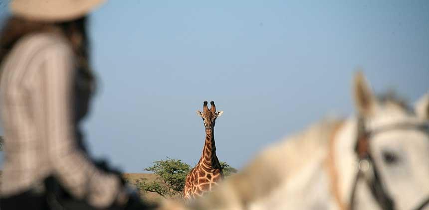IMG_6701__Giraff.jpg