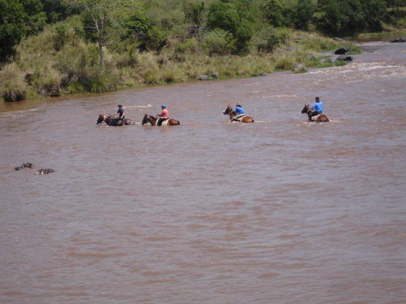 A very swollen Mara River, as hippos look on!