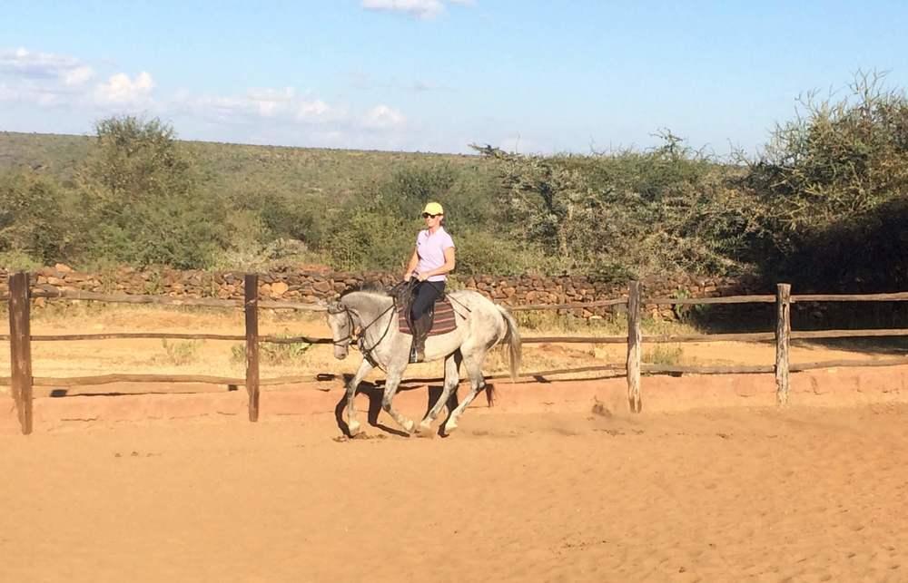 LEPRECHAUN - Homebred 8yro safari horse