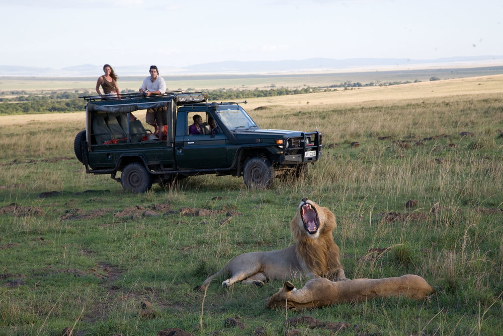 Game drives in the Mara North Conservancy
