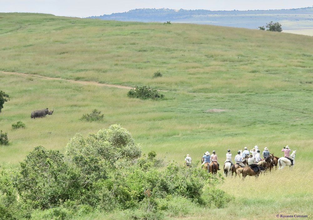 Rhino in Borana - Friday 201th July.jpeg
