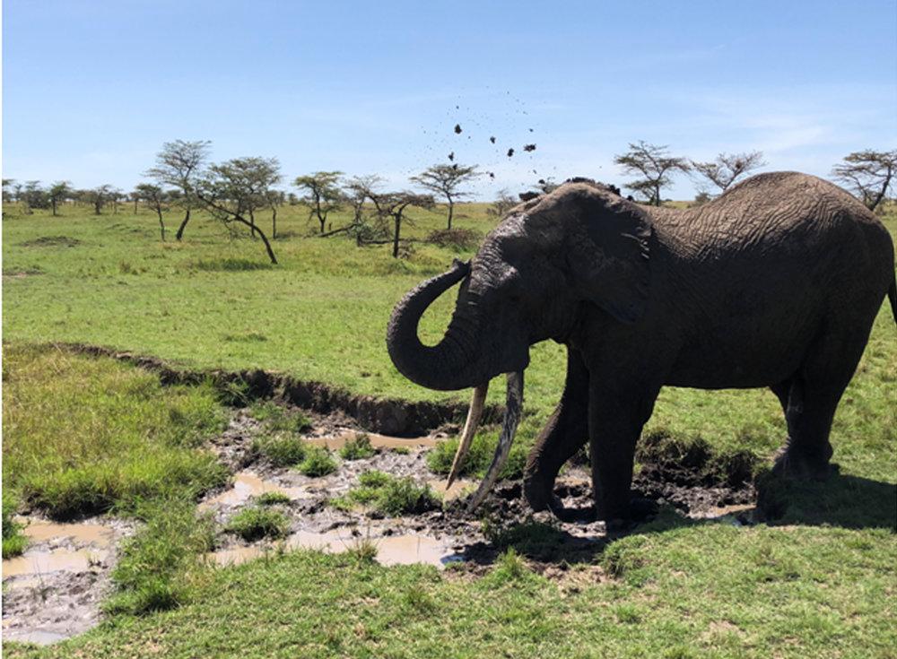 Elephant spa.jpg