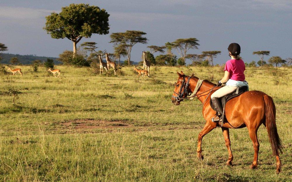 giraffe on horse back.jpg