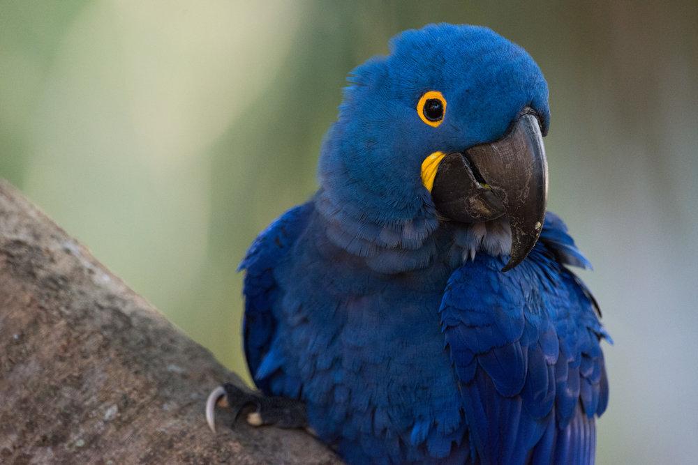Hyacinth Bucket...sorry, macaw
