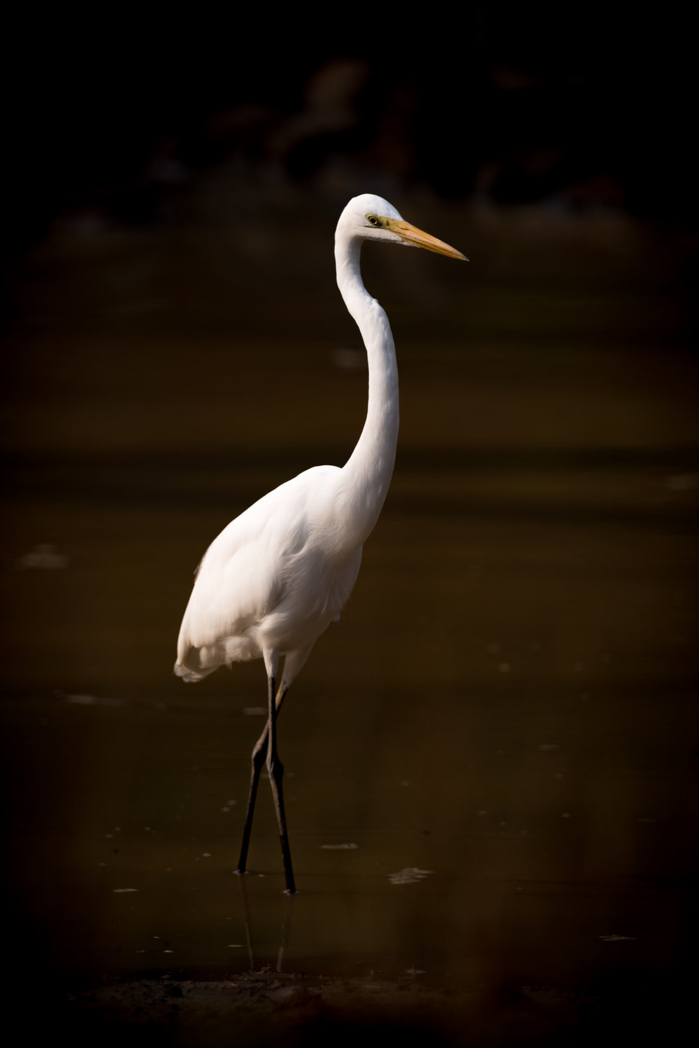 """Egrets, I've had a few, but then again, too few to mention..."""