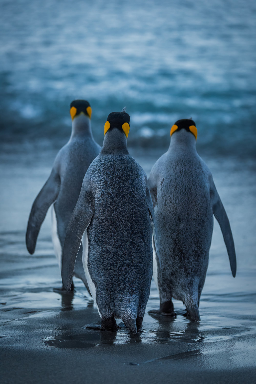 """""""We three kings of Orient are"""" Ola  """"Me and my buddies skinny-dipping!"""" Angie"""