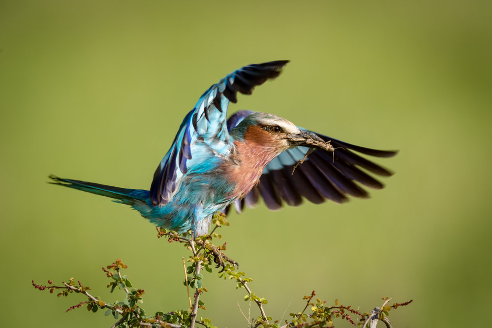 """""""Well, that's the last time I'm flying Kingfisher!"""" Nick Odermatt"""