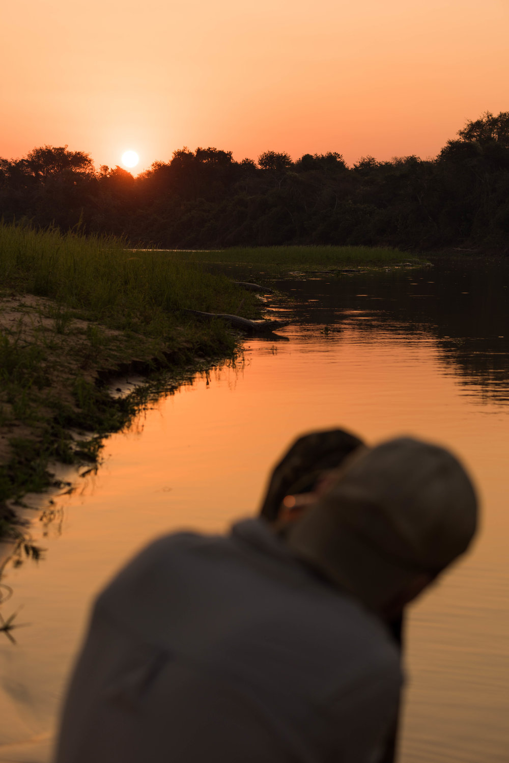 Photographer shooting yacare caiman along river bank