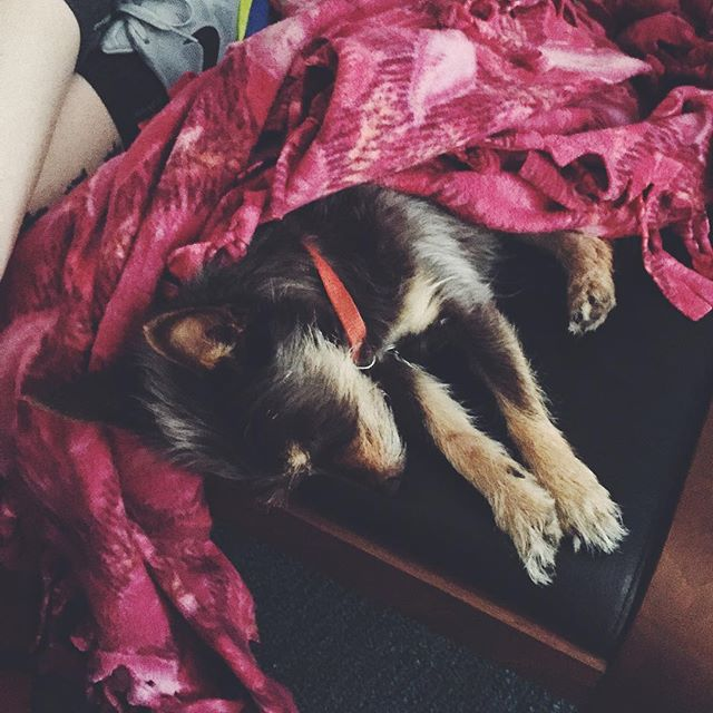 The Brody is out! #onephotoadayinmay  #vsco #vscocam #vscogood #friends #dog #puppy #sleeping #bayarea #dogsofinstagram