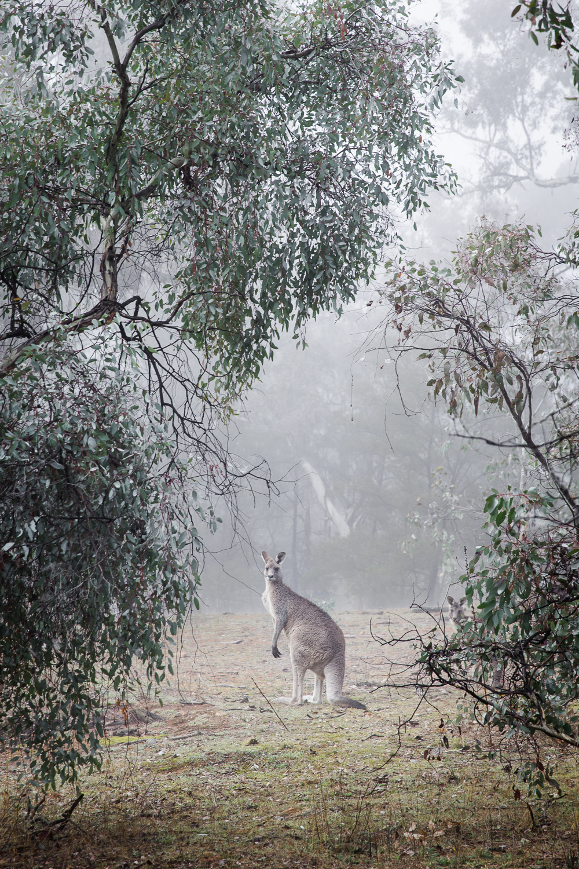 Lean+Timms+Canberra+Fog+(17+of+21).jpg