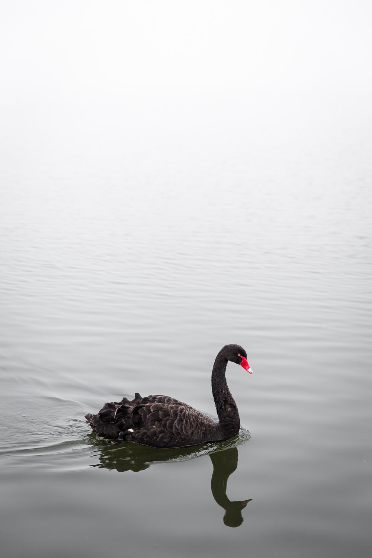 Lean+Timms+Canberra+Fog+(14+of+21).jpg