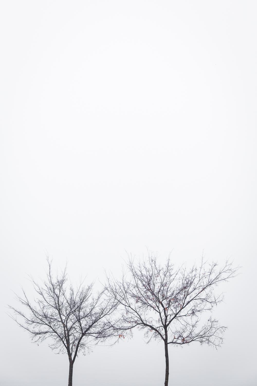 Lean+Timms+Canberra+Fog+(10+of+21).jpg