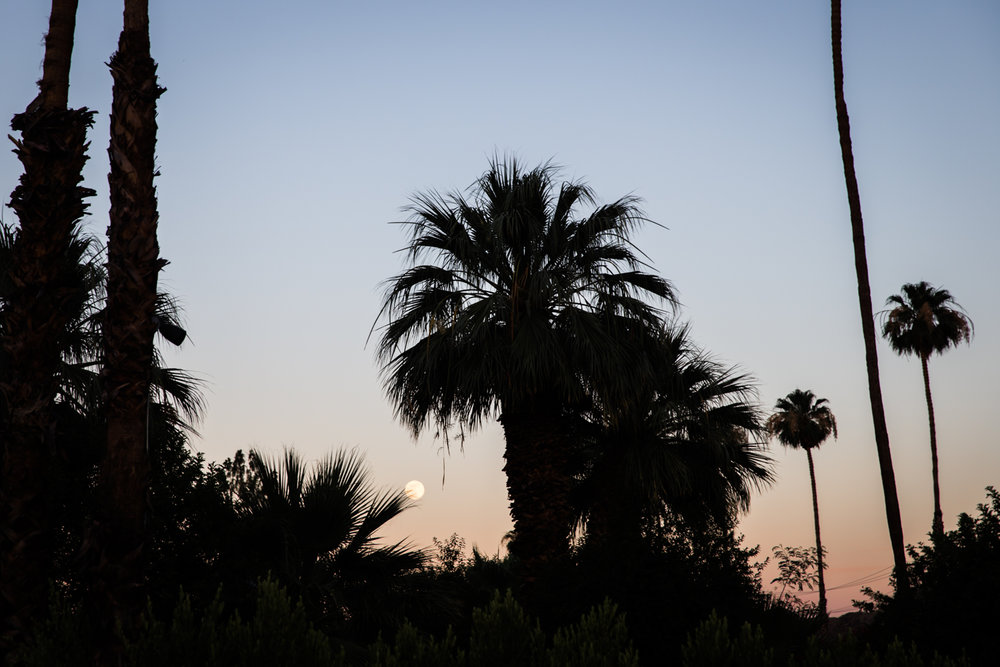 Parker Palm Springs Lean Timms LR69.jpg