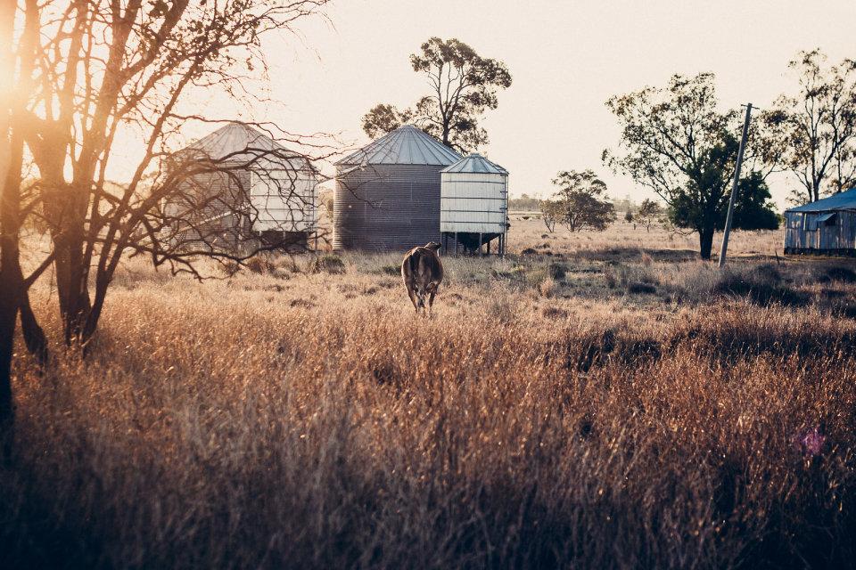 Limettenfarm, Wyomings,Australien, 2012
