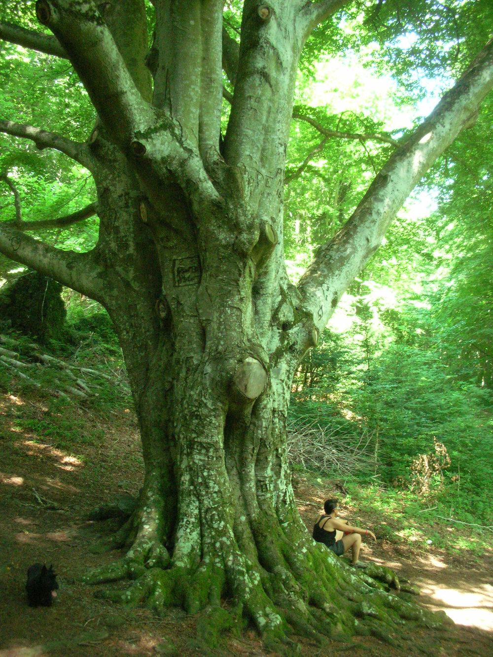 Green Trees 3.jpg
