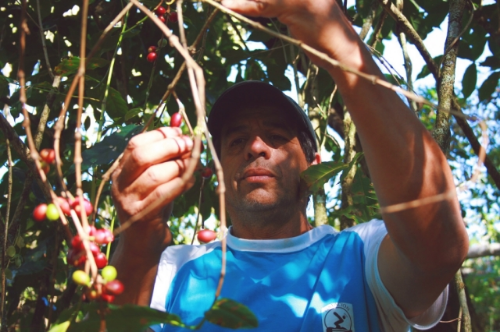 Carlos helping me pick coffee at Chamaco, Tematica