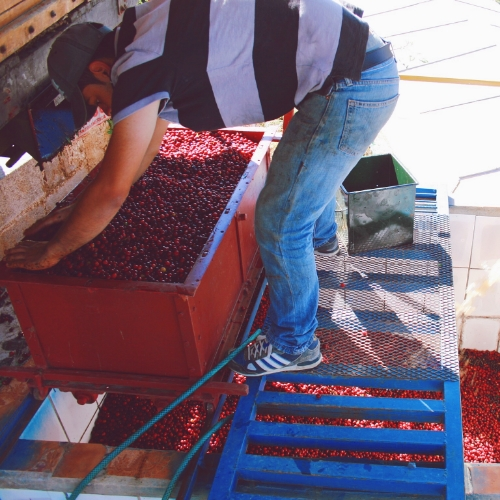 Enrique at Monte Copey Micro