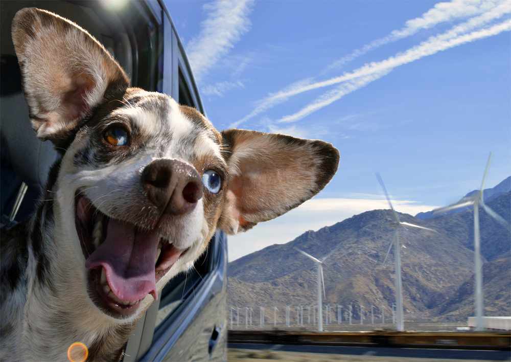 DogsinCars.1for website.jpg