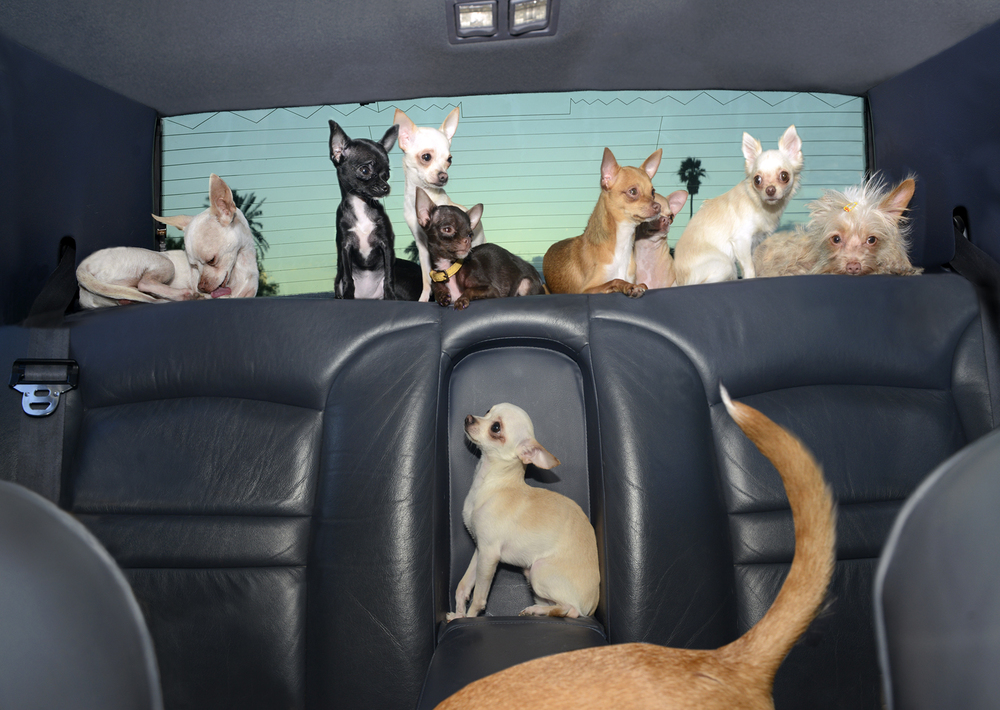 DogsinCars.8for website.jpg