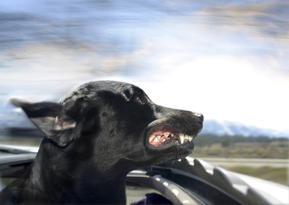 DogsinCars.6for website.jpg