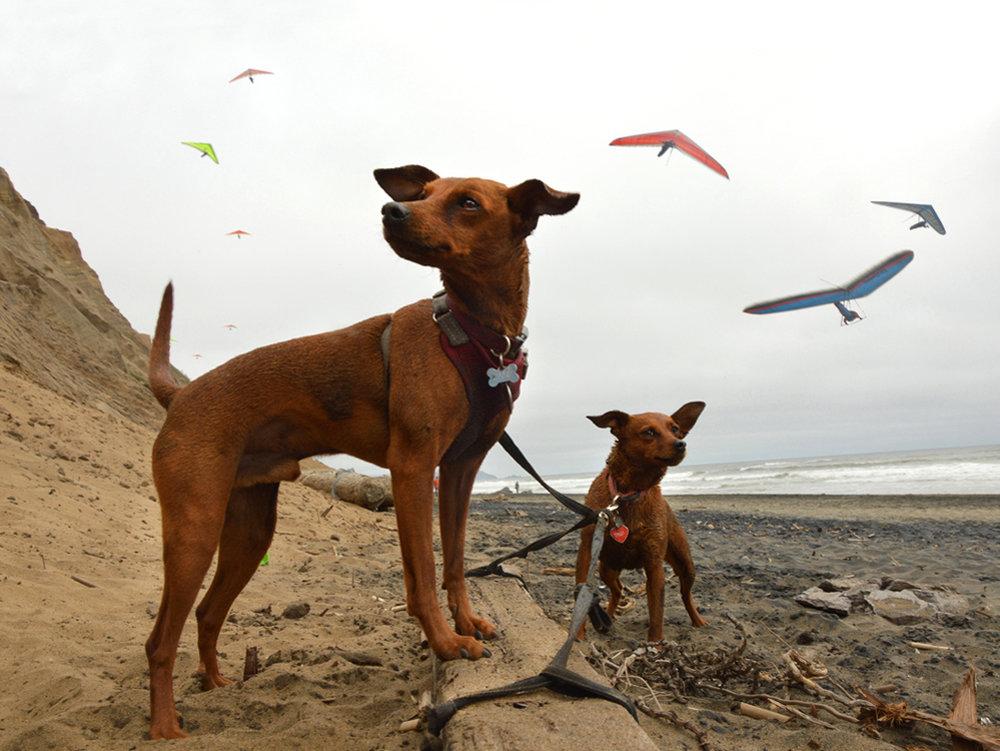 sqsp kite.jpg