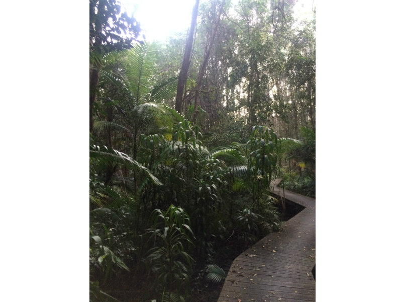 rainforest boardwalk at the back gate