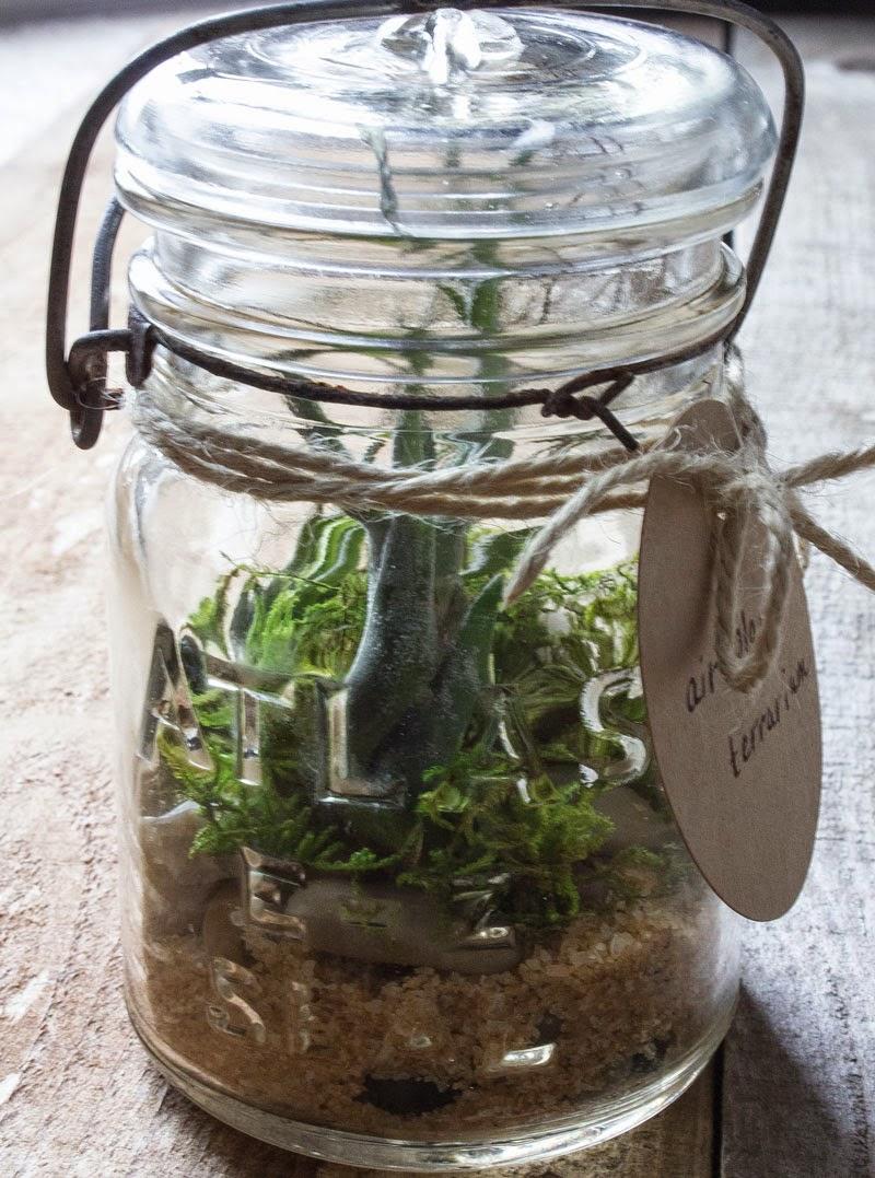 DIY-mason-jar-terrarium.jpg