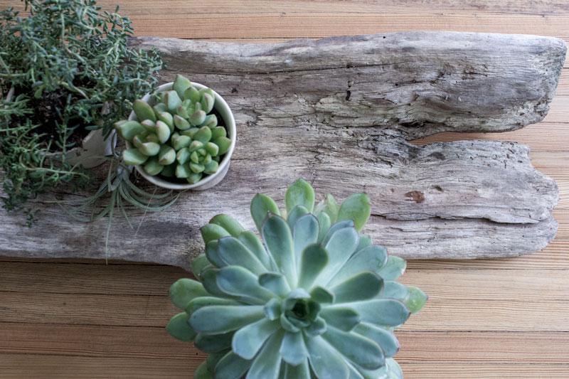 driftwood succulent centerpiece
