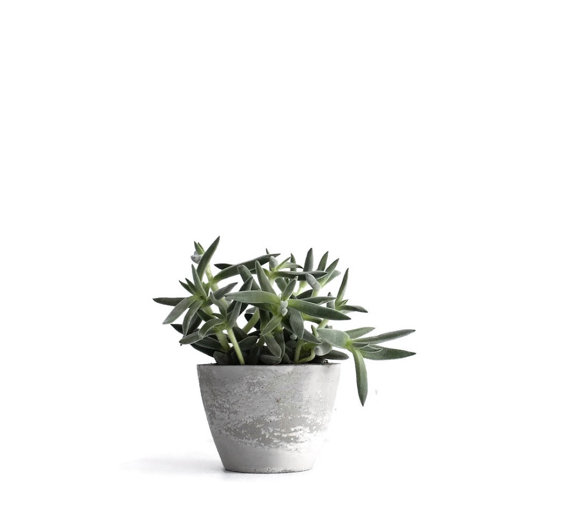 concrete planter - sustainable gift guide