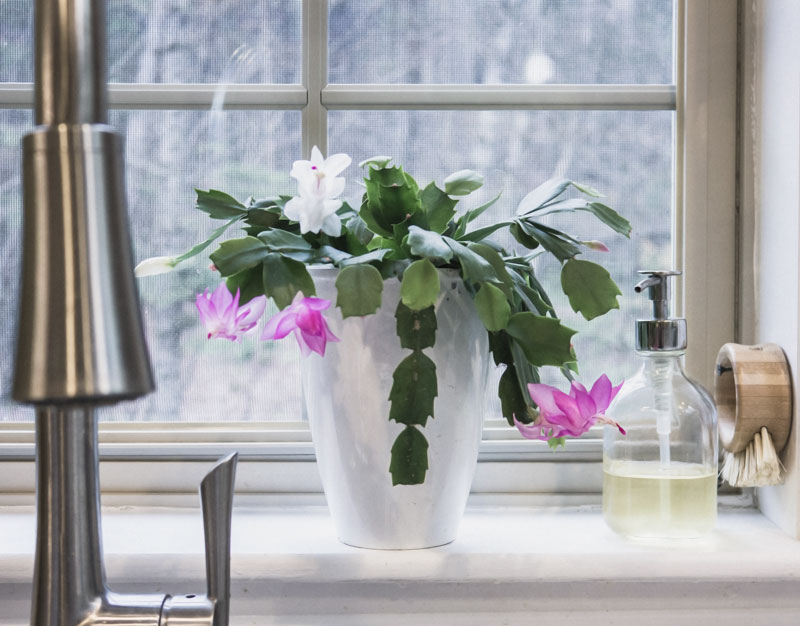 5 essentials for simple spring cleaning