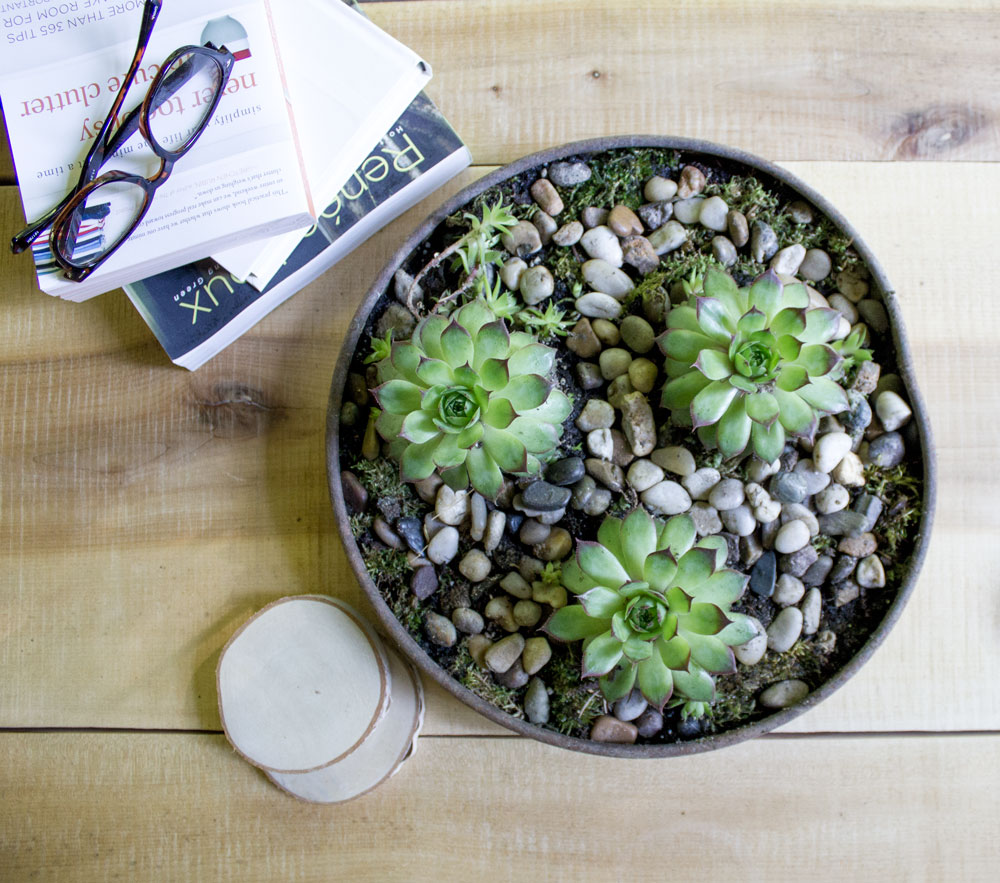 succulents in shallow tray on coffee table