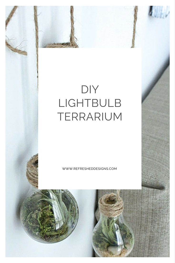 DIY lightbulb terrarium using recycled lightbulbs