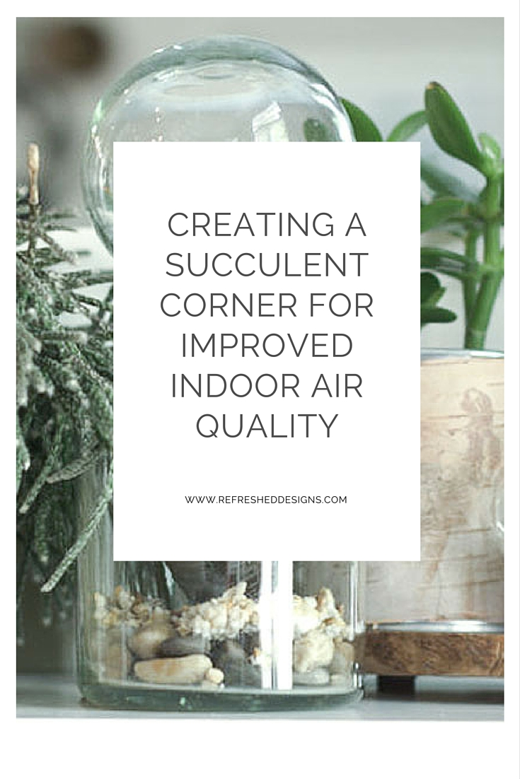 Using succulents to improve indoor air quality refreshed for Indoor air quality design