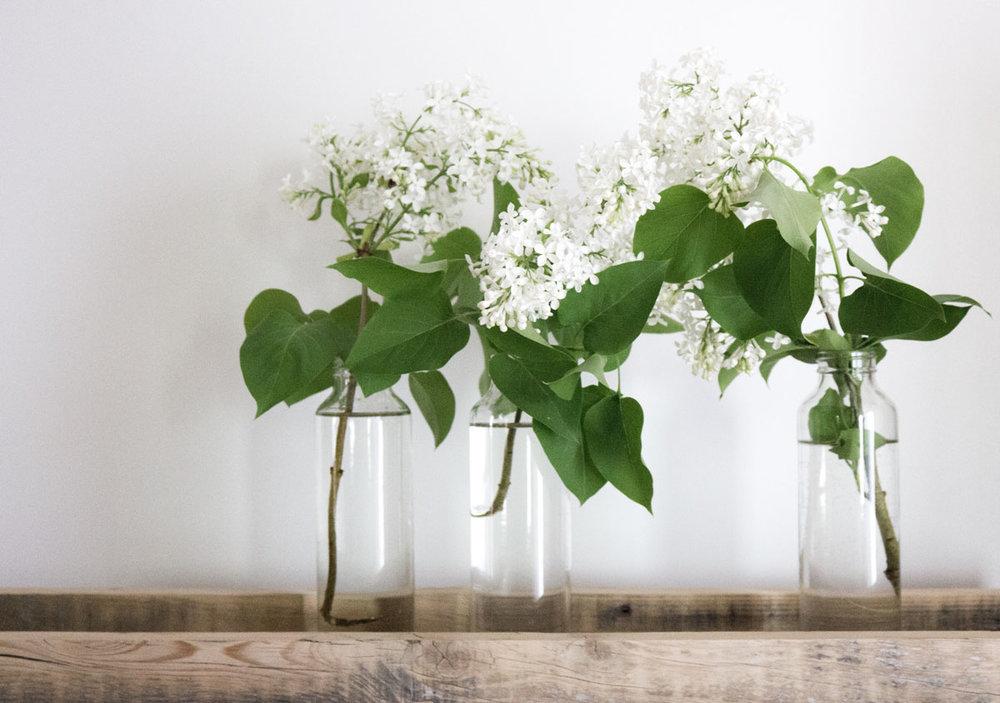 tray-of-white-lilacs.jpg