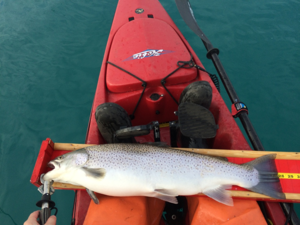 One of many healthy brown trout from this month.