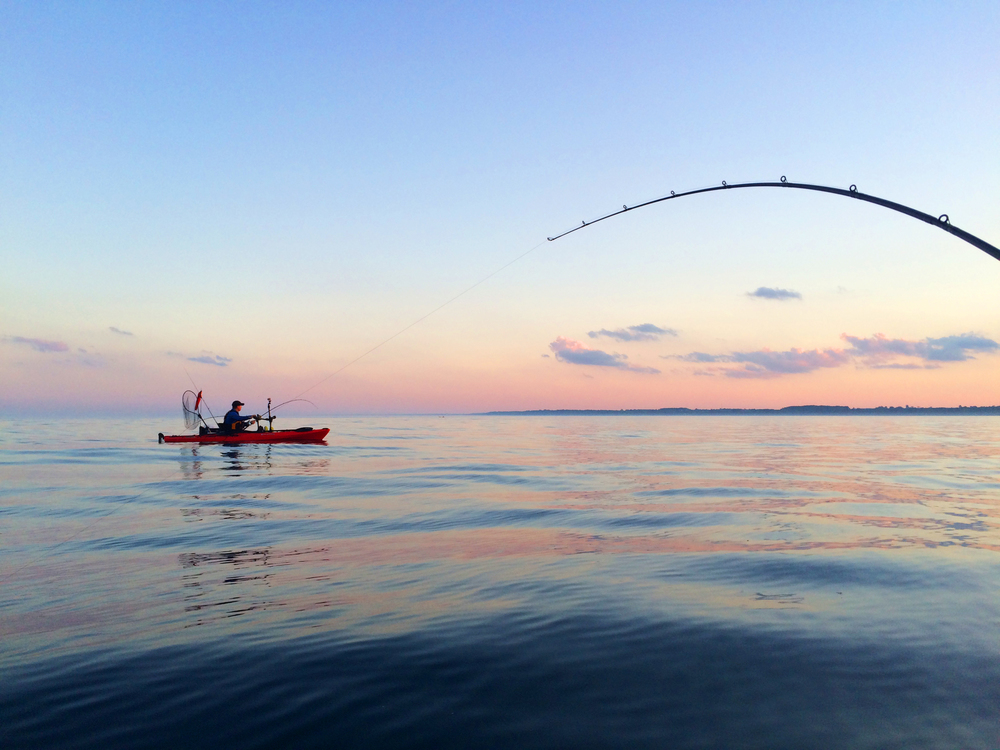Mark fighting a strong King Salmon just before sunset during Salmon-A-Rama.