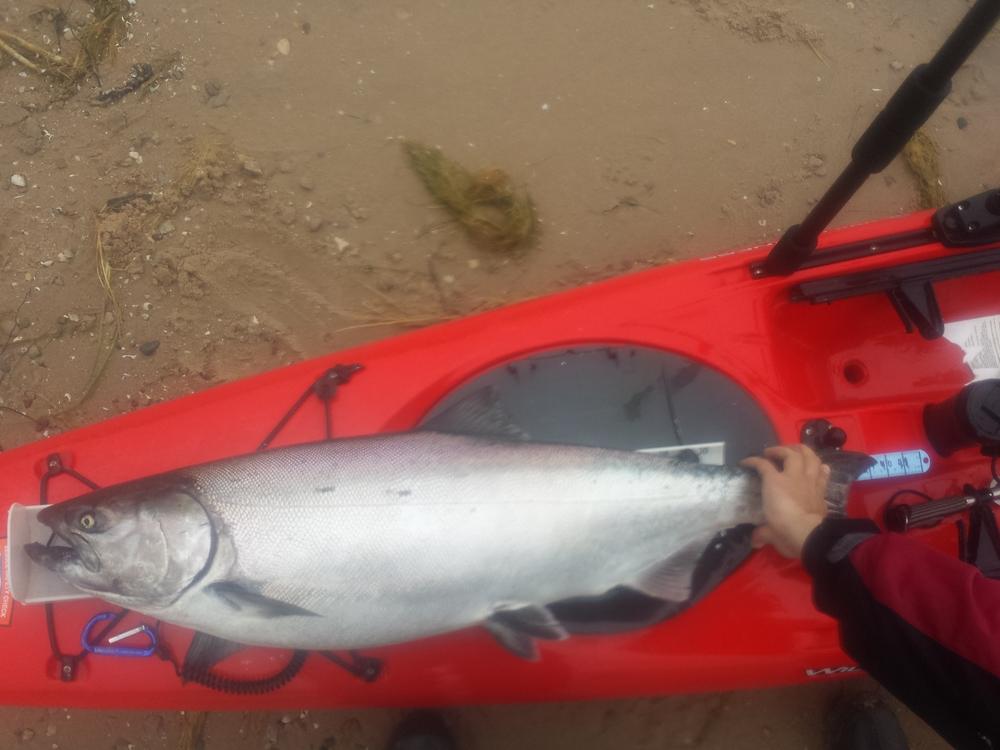 "39.5""... new Kayak Wars Record!"