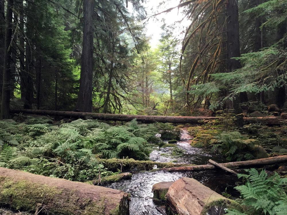 A tree clogged tributary alongside the trail.
