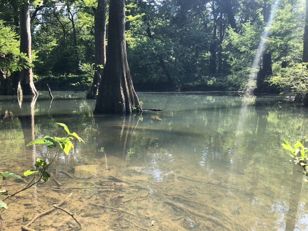 In several spots along the Little Maumelle River can be seen stands of cypress knobs, even more stunning from water height.
